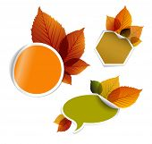 Set of vector autumn discount tickets, labels, stamps, stickers with colorful leafs poster