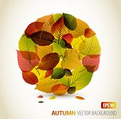 Autumn abstract floral background - circle from colorful leafs with place for your text poster