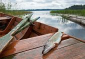 September's Russian lake scenery with wooden boat and raw fish poster