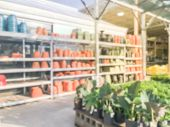 Blurred colorful terra cotta clay pots, nursery trees for sale at home improvement store in USA. Variety of container gardening of flower, herb, vegetable at garden center poster