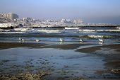 Sea gulls on the shore in the winter poster