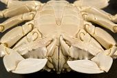 underside detail of a moon crab in black back poster