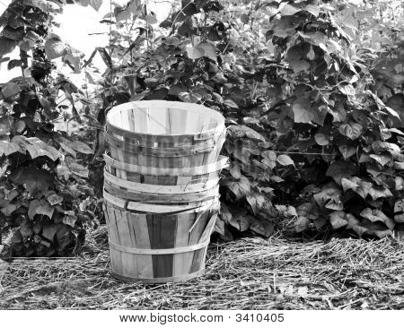 Baskets In Black And White