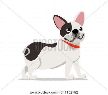 Cute French Bulldog Flat Vector Illustration. Little Frenchie Breed Puppy Cartoon Character. Cheerfu