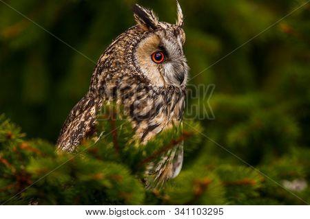 Eurasian Eagle Owl (bubo Bubo) Portrait, Owls Are Often Used As A Symbol Of Wisdom, Selective Focus