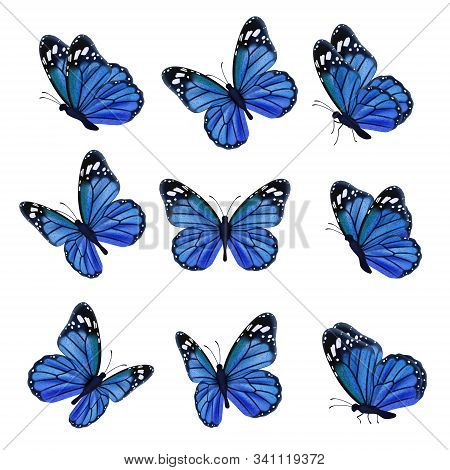 Colored Butterflies. Flying Beautiful Insects Wedding Butterfly With Decorated Wings Vector. Illustr