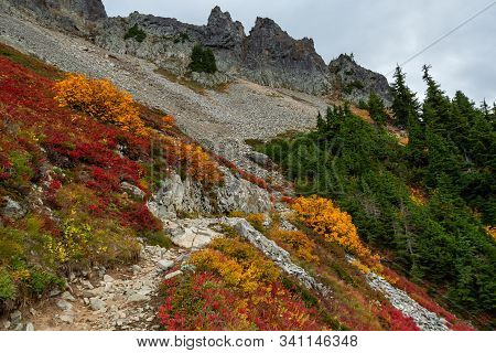 Vibrant Fall Colors In Brush Stand Out From Rocky Trail On Way Up Pinnacle Peak
