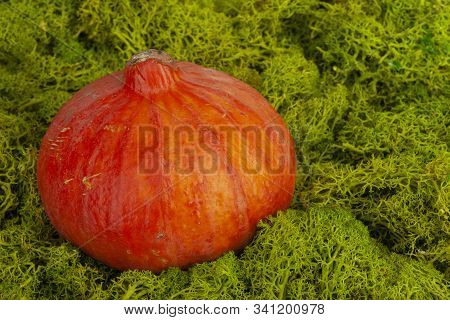 Happy Thanksgiving Background. Close Up Of A Little Decorative Pumpkin. Autumn Harvest And Holiday M