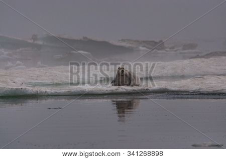 Sea Mammals Of The Sea Of Okhotsk In Natural Conditions