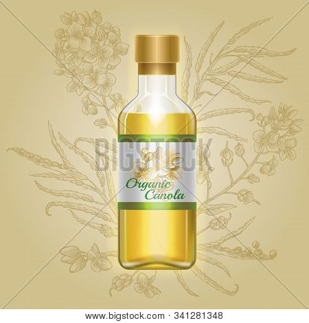 Organic Canola, Mustard Oil In Glass Bottle With Drawn Flowers On Label. Vector Illustration Of Cont