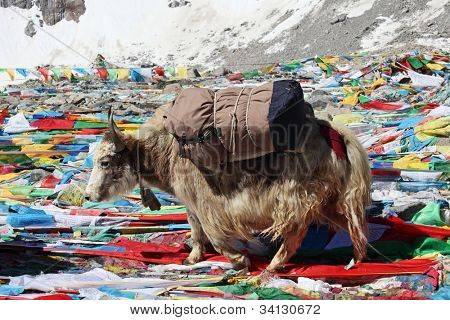 Yak in Tibet with Buddhist prayer flags background poster