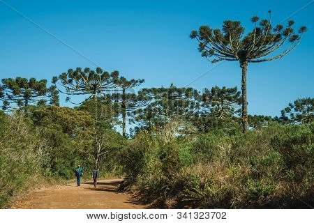 Cambara Do Sul, Brazil - July 16, 2019. People Hiking On Pathway Through Forest At Aparados Da Serra