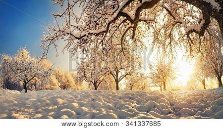 Panoramic Winter Rural Landscape With The Sun Shining Gold Behind A Beautiful Snow-covered Tree On A