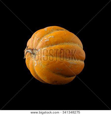 Whole Oriental Melon (or Korean Melon) On Black Background. It Looks Like A Pumpkin, But It Is Actua
