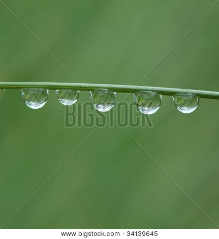 Water drops on a grass blade