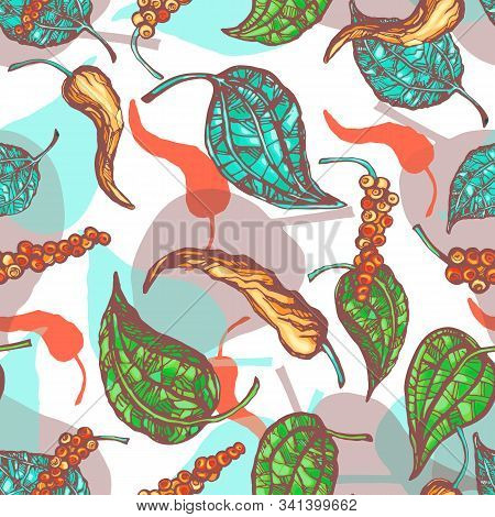 Vector Illustration Of Plant Of Black Pepper With The Leaves And Allspice Isolated On White Backgrou