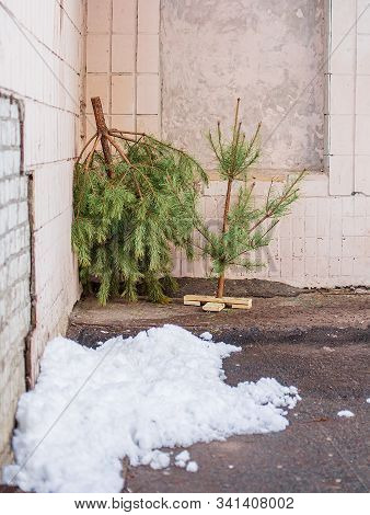Discarded Christmas Tree near trash cans. The end of the holiday period is marked. The problem of processing. poster