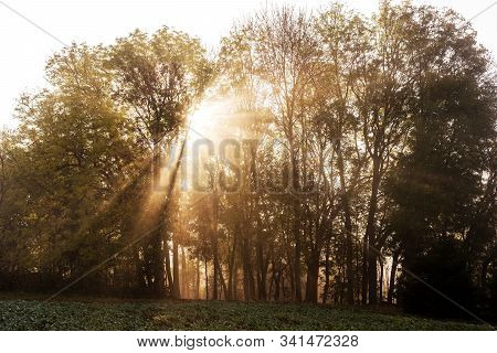 Morning Sun Rays In A Misty Forest