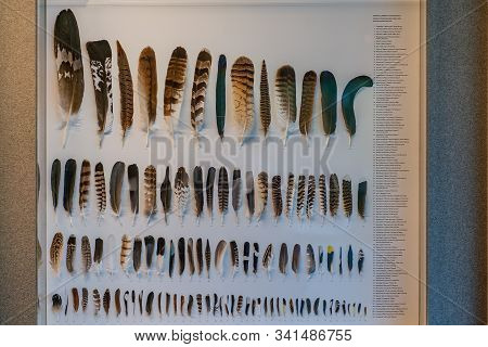 St. Magdalena, South Tyrol, Italy -  October 23, 2019: Display Of Feathers Of Alpine Birds At The Na