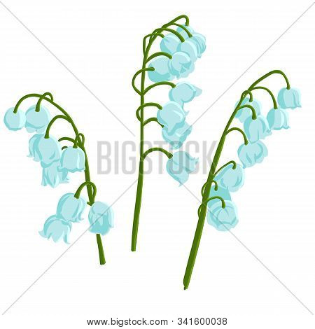 Vector Drawing Bell Flowers, Lily-of-the-valley, Convallaria, Isolated Floral Elements At White Back