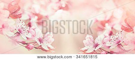 Flowering, Blooming Branch Of Fruit Tree, Tree In Bloom