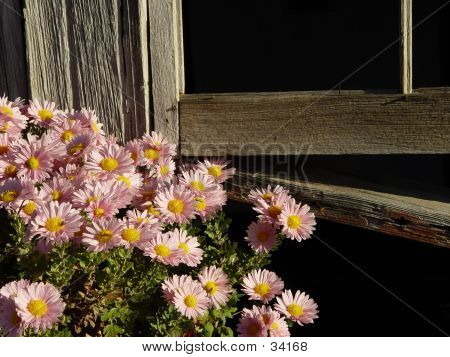 Flowers And Old Window