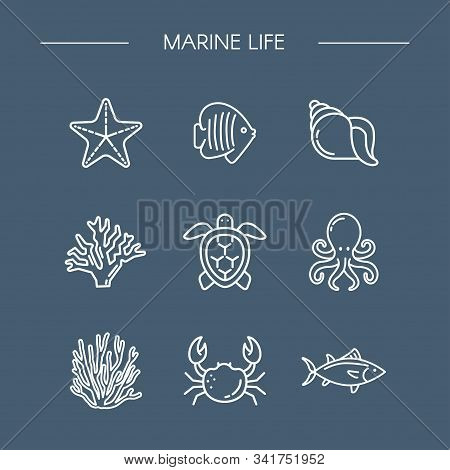 Marine Life Icons Set For Design. Icon Fish, Starfish, Coral, Octopus, Crab. Oceanology. Linear Styl