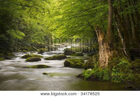 Peaceful Great Smoky Mountains National Park Foggy Tremont River