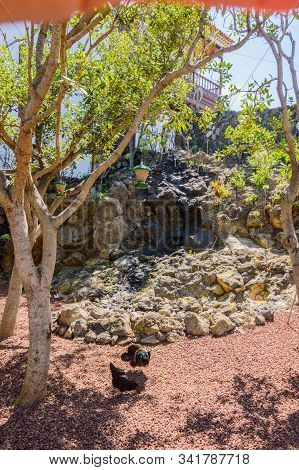 Chickens Pecking The Volcanic Land In A Square In The Center Of Icod De Los Vinos. April 14, 2019. I