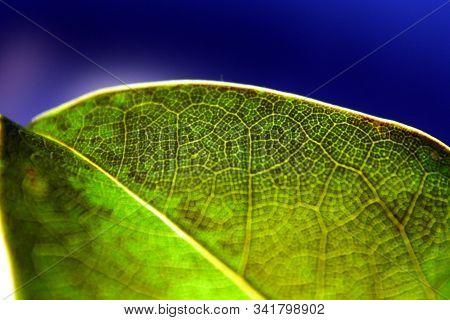 Close Up Of A Green Leaf (macro)