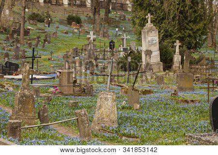 Vilnius,užupis/lithuania-april,11,2019: Impressive Bloom Of Scilla Siberica In One Oldest 19c. Berna