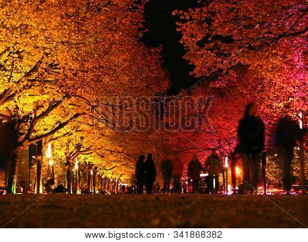 Colorfully Lit Trees At Night With Passersby