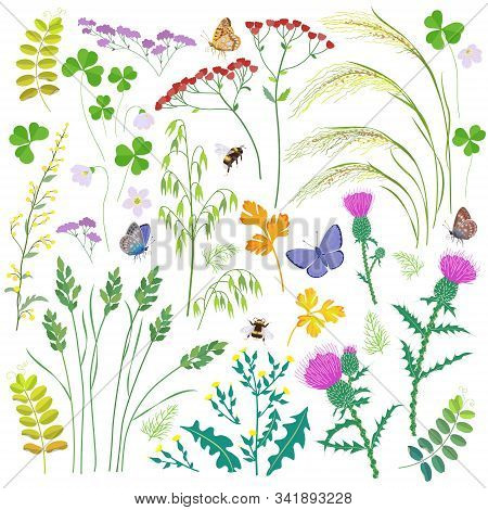 Set Of Wild Grasses, Herbs, Wildflowers, Cereals And Insects Isolated On White. Simple Oats, Lettuce