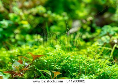 Bright Green Vegetation Cover Of Herbs. Natural Vegetation.