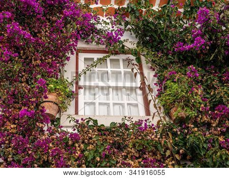 Flowering Bush Surrounds Window In The Old Medieval Walled City Of Obidos In Portugal