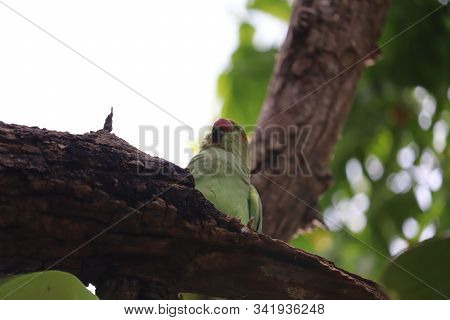 Green Parrot Scarlet Macaw, Ara Macao, Bird Sitting On The Pal Tree Trunk, Wildlife Scene From Tropi