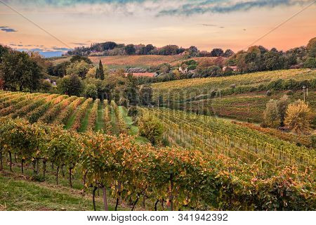 Faenza, Ravenna, Emilia Romagna, Italy: Landscape At Dawn Of The Countryside With Vineyards For Wine