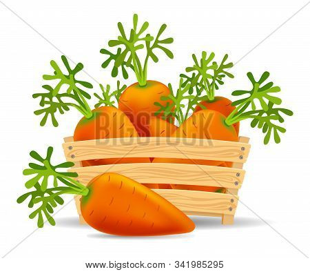 Carrots In A Wooden Box. Fresh Healthiest Vegetables. Autumn Harvest.