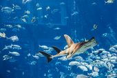 a large grey shark poster