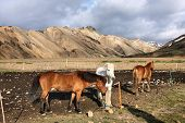 Iceland mountains. Famous volcanic area with rhyolite rocks - Landmannalaugar and Icelandic horses. poster