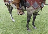Medieval horse, detail of a horse dressed for war poster