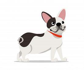 Cute French Bulldog Flat Vector Illustration. Little Frenchie Breed Puppy Cartoon Character. Cheerfu