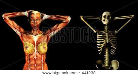 Muscle And Bone 4