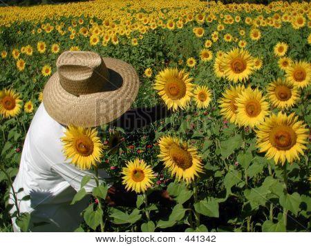 Sunflower Farmer