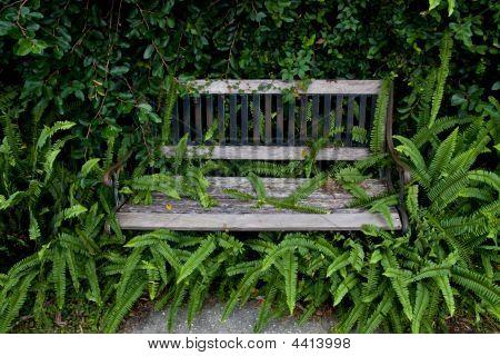 Overgrown Parck Bench