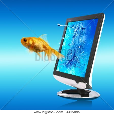 Golden Fish And Screen