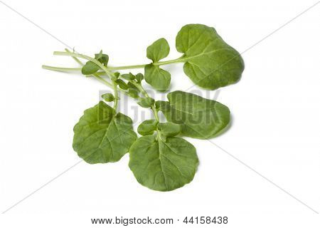 Fresh Barbarea or winter cress on white background