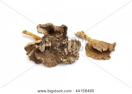 Chanterelle Grise mushrooms on white background