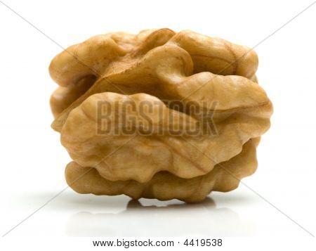 Nutsmeat