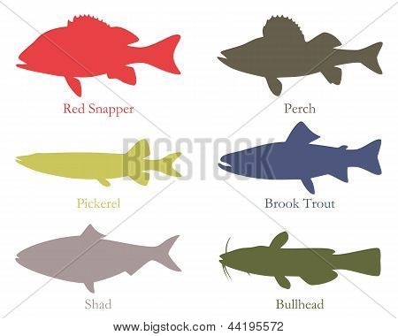 North American Food Fish